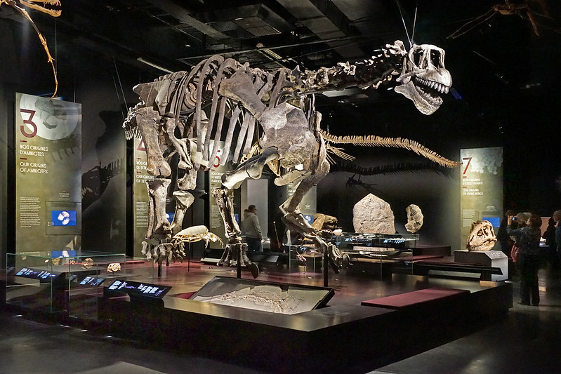 Camarasaurus dans la salle des Origines du musée Confluence